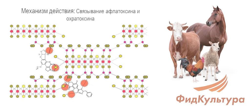Механизм действия адсорбента микотоксинов