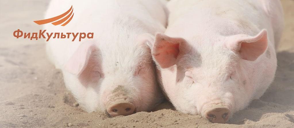 Преимущества применения витаминно-минеральных комплексов для свиней